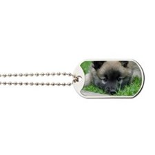 Icelandic Sheepdog025 Dog Tags