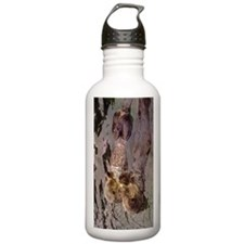 Sea Otters Holding Hands Water Bottle