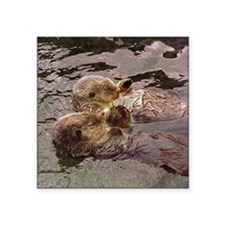 """Sea Otters Holding Hands Square Sticker 3"""" x 3"""""""