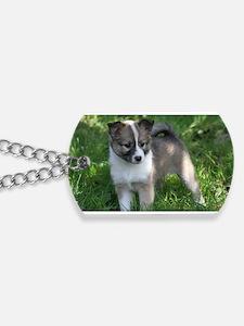 IcelandicSheepdog028 Dog Tags