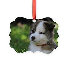 IcelandicSheepdog031 Picture Ornament