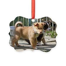 IcelandicSheepdog035 Picture Ornament