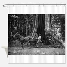 Carriage in the Hollow Tree Shower Curtain