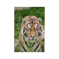 Tiger023 Rectangle Magnet