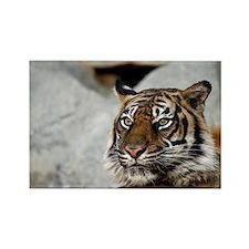 Tiger029 Rectangle Magnet