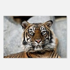 Tiger030 Postcards (Package of 8)