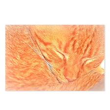 Orange Tabby Cat Postcards (Package of 8)
