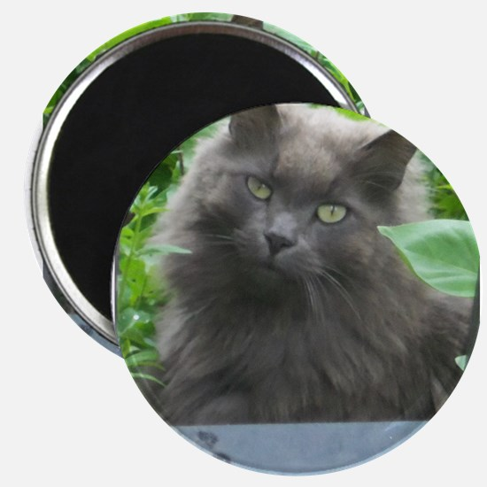 Long Haired Russian Blue Cat Magnets