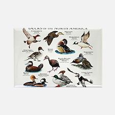 Ducks of North America Rectangle Magnet