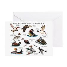 Ducks of North America Greeting Card