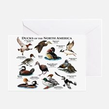 Ducks of North America Greeting Card