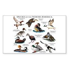 Ducks of North America Decal