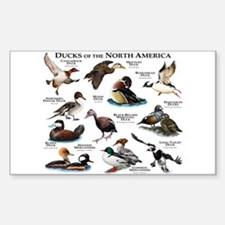 Ducks of North America Decal