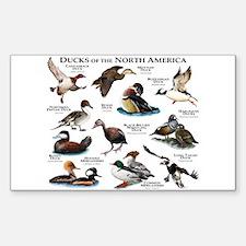 Ducks of North America Sticker (Rectangle)