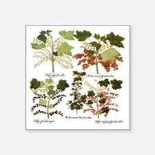 "Vintage Currants by Basiliu Square Sticker 3"" x 3"""