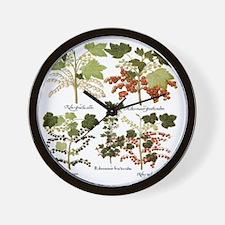 Vintage Currants by Basilius Besler Wall Clock