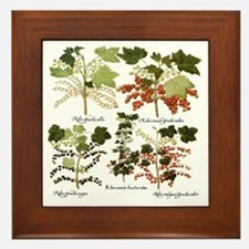 Vintage Currants by Basilius Besler Framed Tile