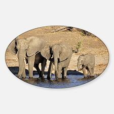 Elephants 006 Sticker (Oval)