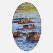 Hippo 03 Sticker (Oval)