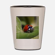 Ladybug 002 Shot Glass