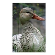 Duck 005 Postcards (Package of 8)
