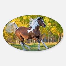 Pinto Arabian running free Decal