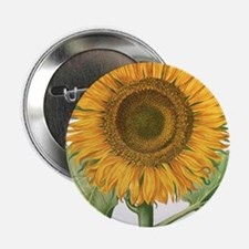 "Vintage Sunflower Basilius Besler 2.25"" Button"