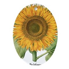 Vintage Sunflower Basilius Besler Oval Ornament