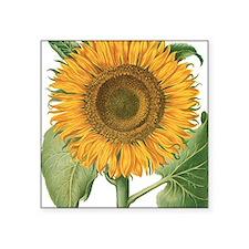 "Vintage Sunflower Basilius  Square Sticker 3"" x 3"""