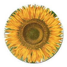 Vintage Sunflower Basilius Besler Round Car Magnet