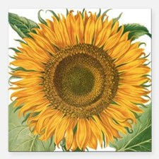 "Vintage Sunflower Basili Square Car Magnet 3"" x 3"""