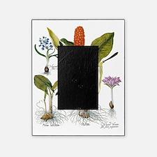 Vintage Flowers by Basilius Besler Picture Frame