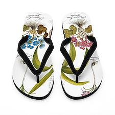 Vintage Flowers by Basilius Besler Flip Flops