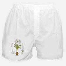 Vintage Flowers by Basilius Besler Boxer Shorts
