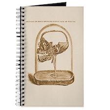 Dental Skull Under Glass Dome Journal