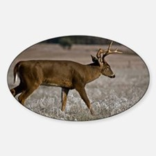 Whitetail in Cades Cove Decal