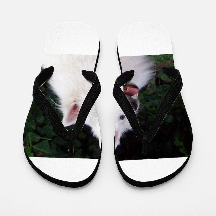 american eskimo Flip Flops