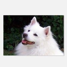 american eskimo Postcards (Package of 8)