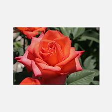 Red Hybrid Tea Rose Rectangle Magnet