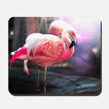 Beautiful Flamingo Mousepad