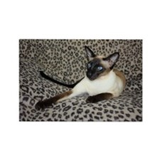 Seal Point Siamese Cat with beaut Rectangle Magnet
