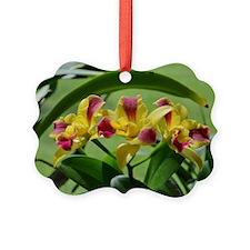Orchid Cattleya Flower Fuschia Ye Ornament