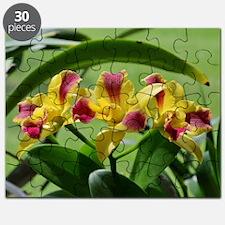 Orchid Cattleya Flower Fuschia Yellow Puzzle