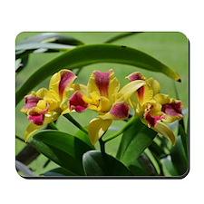 Orchid Cattleya Flower Fuschia Yellow Mousepad