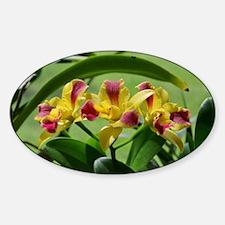 Orchid Cattleya Flower Fuschia Yell Decal