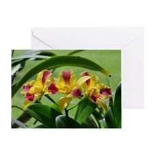 Orchid Cattleya Flower Fuschia Yello Greeting Card