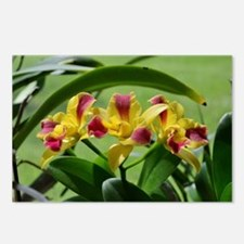 Orchid Cattleya Flower Fu Postcards (Package of 8)
