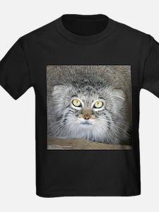 Pallas' Cat T