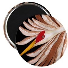 Love Sandhill Cranes Love Birds Magnet