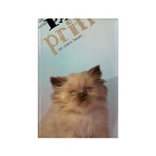 Brown Persian Kitten Rectangle Magnet